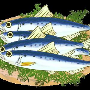 背の青いお魚
