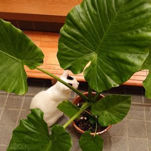 写真を撮ろうとすると、いつも出てくるのがイチゴちゃん。今日は観葉植物と一緒です。