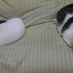 今日も仕事で、土いじりできませんでした。我が家の猫ちゃんたちはもう、ウトウト(⋈◍>◡<◍)。✧♡