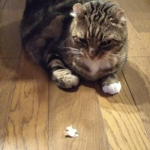 「待て」をする猫