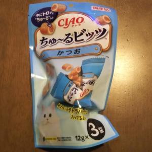 猫に薬を飲ませる #ちゅーるビッツ