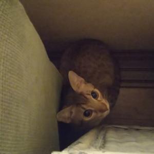 猫ブログ_我が家に3代目の猫が来た #オシキャット