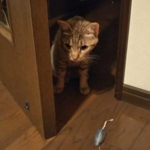 猫ブログ_リビングに入れない猫 #オシキャット
