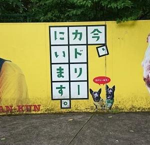阿蘇カドリードミニオン:熊本・阿蘇市