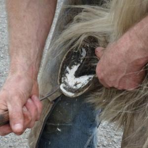 馬の爪切り(削蹄)