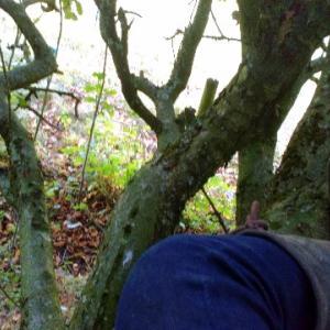 大人の木登りとアップルパイと馬