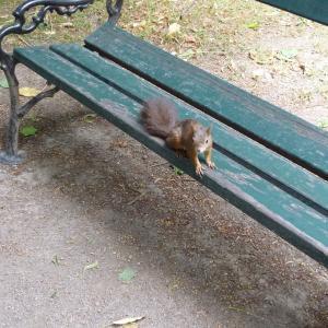 シェーンブルン宮殿の庭で動物たちに追いかけられた話