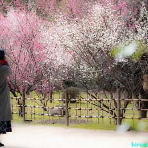 春をキャッチ〜