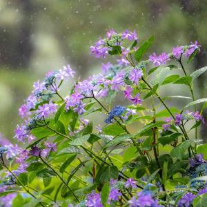 雨の贈り物