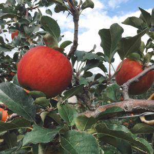 【新規就農】いただきました、里親さんの名言!:休んで働いてまた休む、作業がはかどる農家さんの知恵