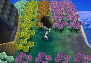 200304 / あつ森までに増築を終わらせて青いバラを作るのです