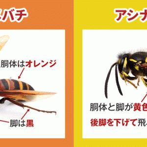 【秋に活発化】今年のスズメバチは凶暴