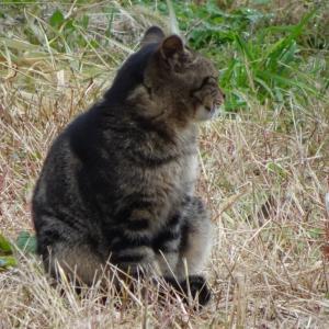 【へら鮒釣り】河口湖の猫