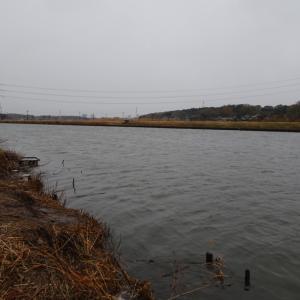 【印旛新川 へら鮒釣り】令和2年1月18日の釣果