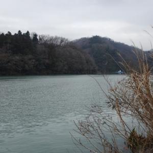 相模湖 上野原へら鮒釣り】令和2年1月22日の釣果