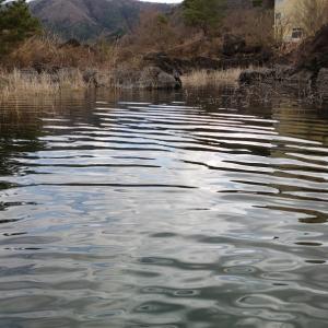 【河口湖へら鮒釣り】令和2年3月28日の釣果