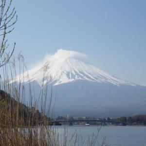 【河口湖へら鮒釣り】令和2年4月4日の釣果