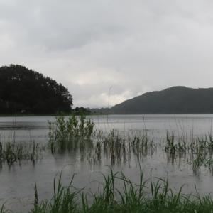 【河口湖へら鮒釣り】令和2年7月11日の釣果