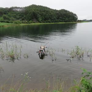 【河口湖へら鮒釣り】令和2年7月18日の釣果
