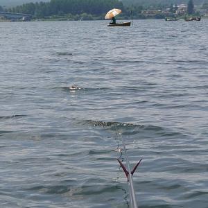 【河口湖へら鮒釣り】舟は竿曲がりまくり