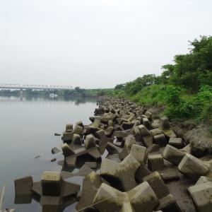 【荒川本流 へら鮒釣り】令和元年7月20日の釣果