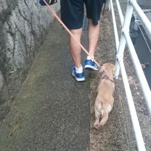 台風が近づく前にお散歩