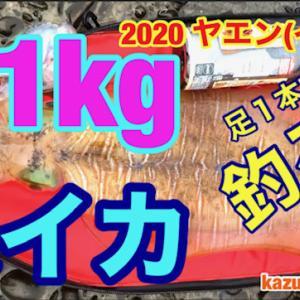 2020 ヤエン15 3.1Kg 大イカ 動画 You Tube にアップしました。