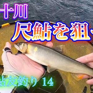 2020 鮎友釣り 14 四万十川 尺鮎を狙って 2 アップしました。