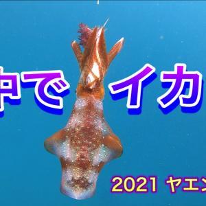 2021ヤエンイカ 9 水中でイカは・・・ 公開予告です