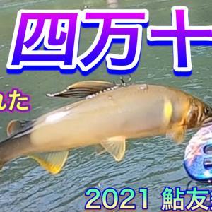 2021 鮎友釣り 4  解禁 午後も釣れた 四万十川 公開予告です