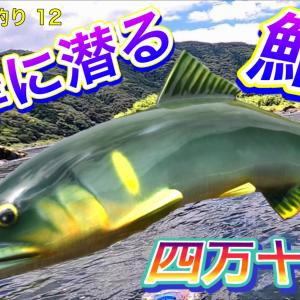 2021 鮎友釣り 12 対岸に潜る 鮎! 四万十川 高知 公開予告です。