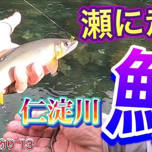 2021 鮎友釣り 13 【瀬に走る鮎 仁淀川】 高知 公開予告です