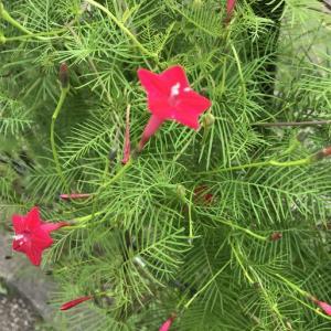 かわいい花が咲いていた!