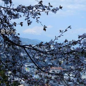 /^o^\ 富士山と桜 3-①