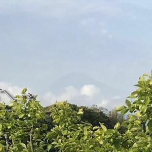 /^o^\ 富士山と柿の花