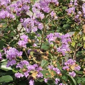 ウォーキング中に見つけた 花たち