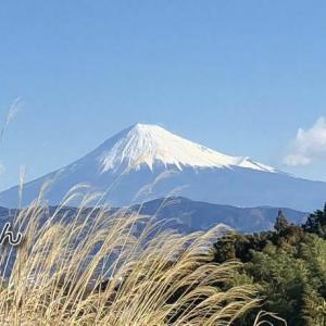 富士山と冬枯れの名残