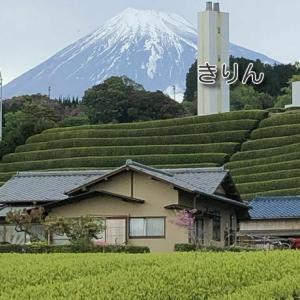 /^o^\ 今日の富士山  藤の花  桜  ツツジ
