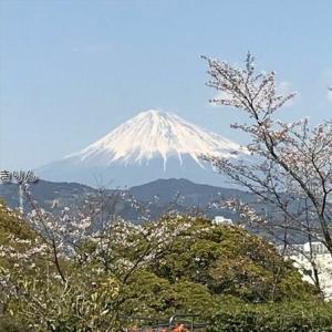 はじめまして! 富士山、桜と公園
