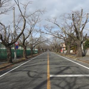 02/17(月)「富岡町 夜の森の桜並木(福島県双葉郡)」放射線量マップ