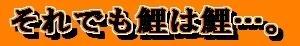 【和と動Ⅱ<5>:●】それでも鯉は鯉…。(6/24)
