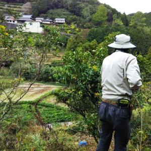 JIN  green  farm   2020 秋