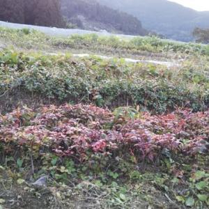 JIN  green  farmだより   冬の始まり<br />