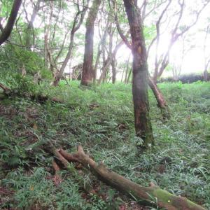 砲台跡入口と展望台下周辺の草刈り
