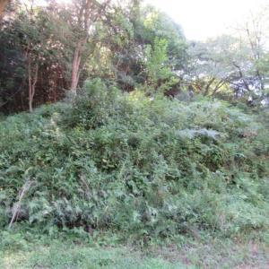 万葉亭南側と展望台~防空指揮所跡までの尾根遊歩道の草刈り作