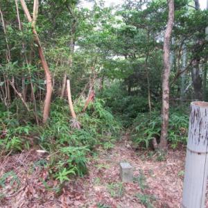 ブラジル松~三角点コース遊歩道の整備
