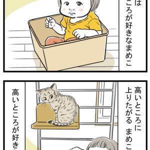 猫と幼児の類似性