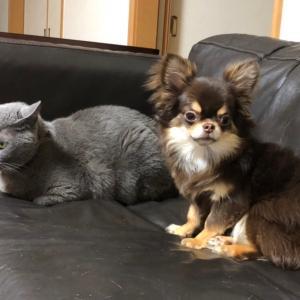 スタッフの愛犬テト君と愛猫ジジ君・・・