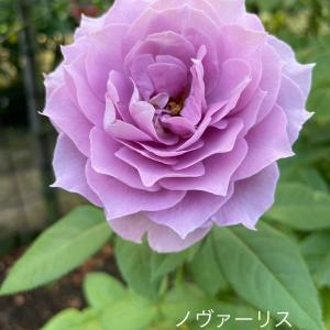 植物園に咲く夏のお花を観賞・・・