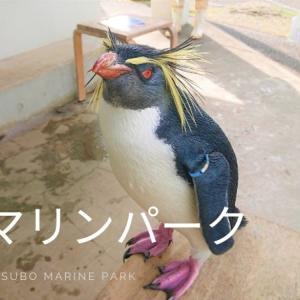 なんだここ!意外に面白い油壷マリンパークに行ってきた♪わんちゃんも入園できる水族館!?
